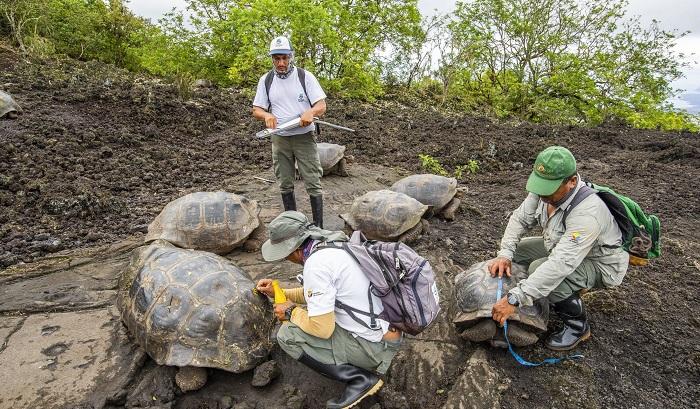 Hallan una tortuga con linaje del extinto Solitario Jorge: Emblema de las Galápagos
